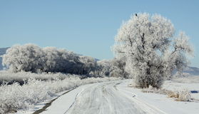 Winter Frost on a Backroad Stock Photo