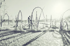 Winter frost. Black white photo winter nature royalty free stock photo