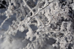 Winter frost on branches. Hoarfrost in cold day Stock Photos