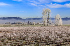 Winter frost on farm fields in Fraser Valley Canada Royalty Free Stock Photos