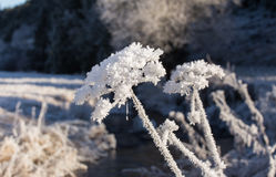 Winter frost flower Royalty Free Stock Photos