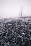 Winter frost and fog - monochrome. A classic winter scene - with frost and fog - viewed in monochrome Stock Photography