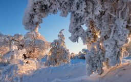 Winter frost forest. Russia. Cold and Snow. On Sunset Stock Images