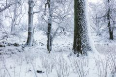 Winter in frost forest with tree and snow royalty free stock image