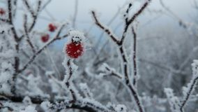 Winter, Frost, Freezing, Snow stock photography