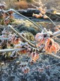 Winter, Frost, Freezing, Tree Stock Photo
