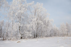 Winter frost landscape Stock Photo