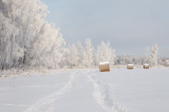 Winter frost landscape Royalty Free Stock Image