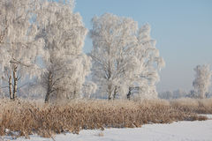 Winter frost landscape Stock Photos