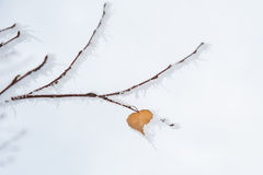Winter frost on leaf-heart Stock Photography