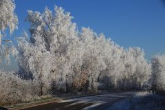 Winter 1918 Frost Lined. We know winter is arriving when those chilling, biting, freezing blustery artic winds, not only increasingly blow the trees leafless Stock Image