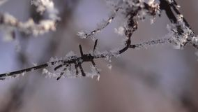 Winter frost stock footage