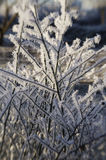 Winter frost Stock Images