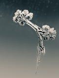 Winter Frost Pattern on Window Stock Photo