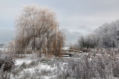 Winter, Frost, Snow, Freezing royalty free stock images