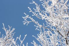 Winter frost snow frost ice crown of an tree against the sky royalty free stock images