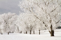 Winter Frost and Snow on Trees. Frosty winter morning in Colorado Stock Photo