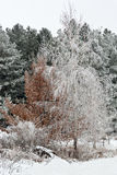 Winter frost on trees Stock Photography