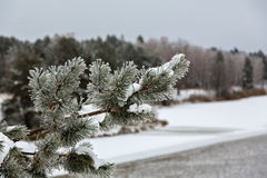 Winter frost on trees Stock Images