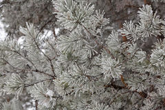 Winter frost on trees Stock Image