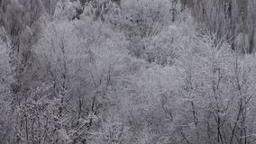 Winter Frost Trees Snowy Background Video stock video