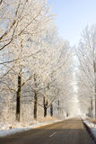 Winter frost in the wild forest. Stock Image