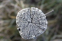 Winter frost on wood Stock Photography