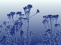 Winter frosted plants. Of feverfew in blue color as a graphic image Royalty Free Stock Photo