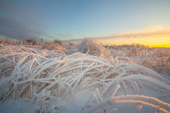 Winter frosty grass at sunrise Stock Photography