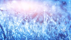 Winter frosty morning. Winter snow background, blue color, snowflakes, sunlight, macro. Frozen grass under the snow, snowflakes and sunlight, rays royalty free illustration