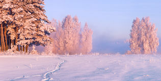 Winter frosty Royalty Free Stock Image