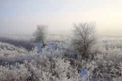 Winter Frosty Trees and Fields Stock Image