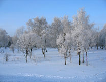 Winter. Frosty trees in the park Stock Image