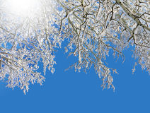 Winter frosty trees and sun Stock Images