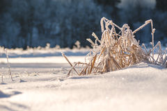 Winter frozen background in nature, freezing crystals on grass, macro photography Royalty Free Stock Photos