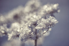 Winter frozen background in nature, freezing crystals on grass, macro photography Royalty Free Stock Image