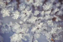Winter frozen background in nature, freezing crystals on grass, macro photography Stock Image