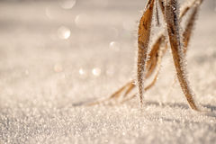 Winter frozen background in nature, freezing crystals on grass, macro photography Royalty Free Stock Photo