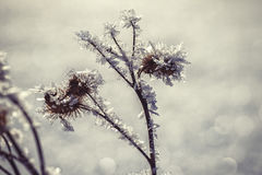Winter frozen background in nature, freezing crystals on grass, macro photography Royalty Free Stock Images