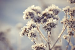 Winter frozen background in nature, freezing crystals on grass, macro photography Stock Photo