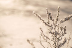 Winter frozen background in nature, freezing crystals on grass, macro photography Royalty Free Stock Photography