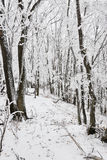 Winter frozen forest Stock Images