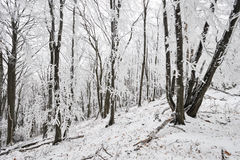 Winter frozen forest Royalty Free Stock Images
