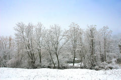 Winter frozen forest background. Winter landscape forest detail with frozen trees and blue sky Royalty Free Stock Photos