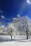 Winter Frozen forest in snow Royalty Free Stock Image