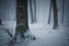 Winter in a frozen forest with snow frost and fog Stock Photography