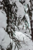 Winter frozen forest and trees. Russian winter frozen forest and trees ander snow royalty free stock photography