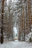 Winter frozen forest and trees. Russian winter frozen forest and trees ander snow Stock Photo