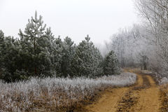 Winter frozen, frosty rural landscape. Stock Photos