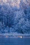 Winter frozen lake and forest at sunrise Royalty Free Stock Image